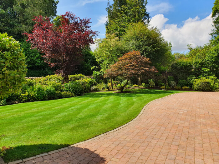 freshly cut grass with paved area and trees in background
