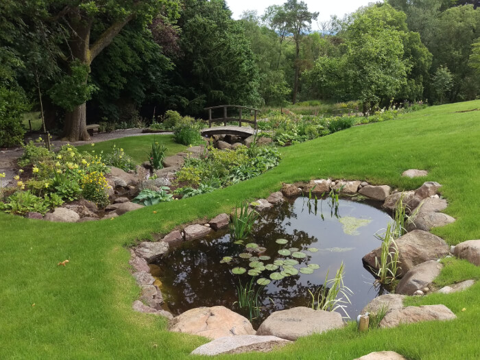 grassy area with small pond with rocks and plants