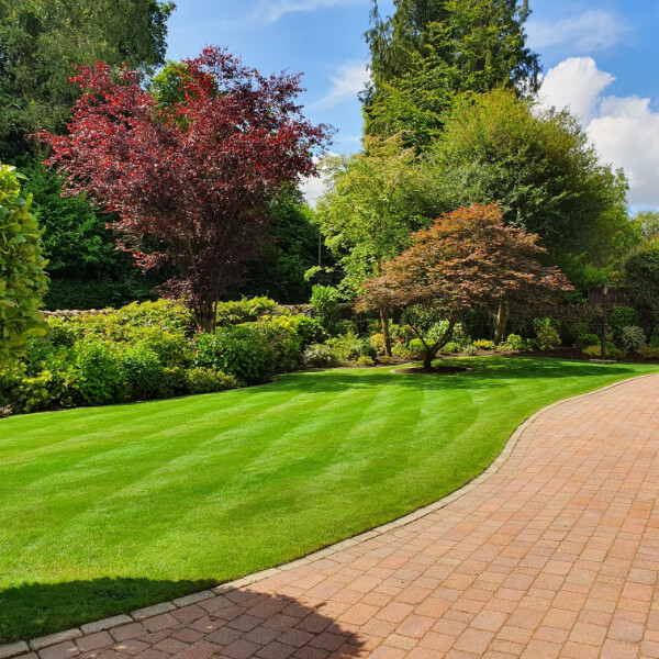 Garden with paved path and trees on a sunny day