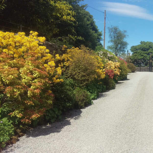 Large bushes in greens and yellows alongsid a road.